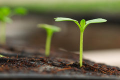 mała rośliny flanca Zdjęcie Stock