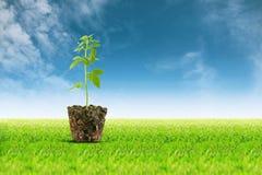 Mała rośliny rozsada na widoku tle Fotografia Stock