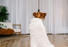Mała rudzielec dziewczyna zakrywająca z nią i szkocką kratą tanczy w domowym pokoju widok z powrotem fotografia royalty free