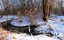 Mała rzeka płynie w zima lesie Obrazy Stock