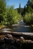 Mała rzeka spada kaskadą przez lasu w Mt St Helens Krajowym zabytku blisko Czerwiec jeziora, portreta aspekt zdjęcie royalty free