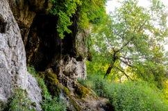 Mała rzeka w głębokich lasów zwrotach w powabną siklawę Zdjęcie Royalty Free