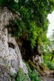 Mała rzeka w głębokich lasów zwrotach w powabną siklawę Obraz Royalty Free