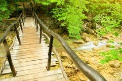Mała rzeka w jesień lesie Fotografia Royalty Free