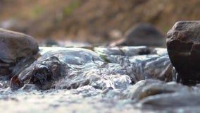 mała rzeka w lasowym zakończeniu w górę zbiory wideo