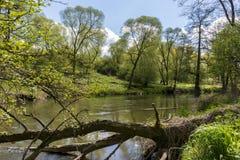 Mała rzeka w lesie Obrazy Royalty Free