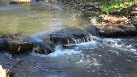 Mała rzeka w starym forestIn dzień jesień zdjęcie wideo