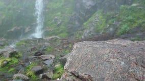 Mała siklawa wśród greenery i skał Biega małą rzekę Wokoło pięknej zielonej trawy r zbiory wideo