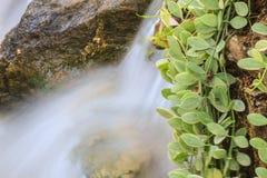 Mała siklawa w ogródzie Fotografia Royalty Free