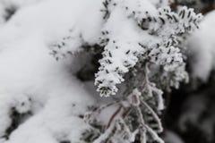 Mała sosna zakrywająca śniegiem Zdjęcia Stock