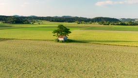 Mała stajnia pod wielkim drzewem, otaczającym z polami i łąkami iluminującymi ranku słońcem zbiory wideo