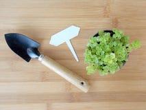 Mała tłustoszowata roślina w garnka odgórnym widoku Obraz Royalty Free