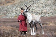 Mała tsaatan chłopiec bawić się z jego rodzinnym ` s reniferem Obraz Stock