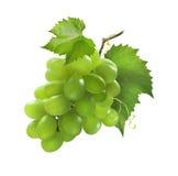 Mała wiązka zieleni winogrona odizolowywający na białym tle zdjęcie stock