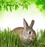 Mały wiosna królik Zdjęcie Royalty Free
