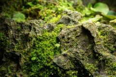 Mała zieleń liści roślina na dużym kamieniu Zdjęcie Royalty Free
