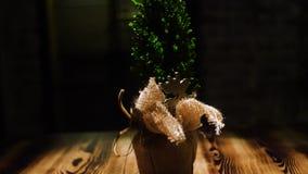 Mała zielona choinka w garnku na ciemnym tle Rama W górę dekoracyjnej choinki jest w torbie na drewnianym zbiory