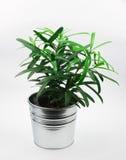 Mała zielona roślina w garnku odizolowywającym na bielu Obrazy Stock