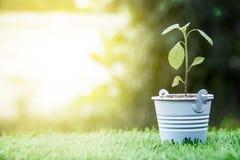 Mała Zielona roślina w koszu na trawy polu Zdjęcie Royalty Free
