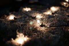 Małe żarówki na dywanie Zdjęcie Royalty Free