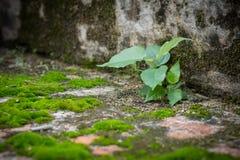 Małe drzewa i mech zieleni paprocie na ściana z cegieł Zdjęcia Stock