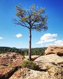 małe drzewko zdjęcia royalty free