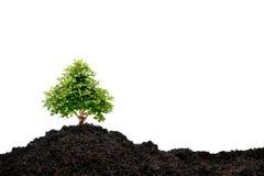 małe drzewko Zdjęcie Stock