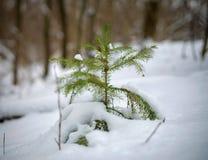 małe drzewo bożego narodzenia zdjęcia royalty free