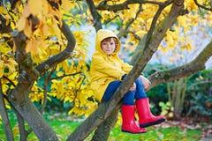Małe dziecko chłopiec w kolorowych ubraniach cieszy się wspinać się na drzewie dalej fotografia royalty free