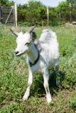 Małe dziecko na łące z zieloną trawą Fotografia Stock
