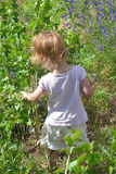 Małe dziewczyny gromadzenia się jagody Obrazy Royalty Free