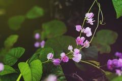 Małe menchie kwitną ` s tło na retro brzmieniu Zdjęcia Stock