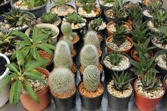 Małe ornamentacyjne rośliny Obraz Stock