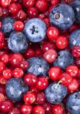 małe owoce fotografia stock