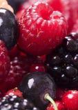 małe owoce Zdjęcie Royalty Free