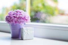 Małe purpury forsują z czułym bukietem piękny różowy goździk z białym prezenta pudełkiem blisko okno w świetle dziennym Obrazy Royalty Free