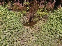 Małe rośliny blisko nawadniają zdjęcia royalty free