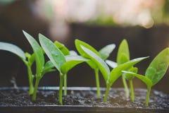 Małe rośliny r na ziemi, nowy życia pojęcie z światła słonecznego tłem Zdjęcia Royalty Free