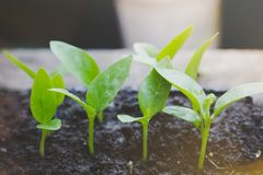 Małe rośliny r na ziemi, nowy życia pojęcie z światła słonecznego tłem Zdjęcia Stock