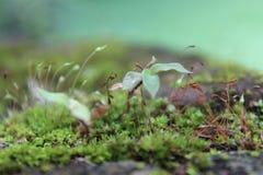 Małe rośliny unfocoused tło Zdjęcia Royalty Free