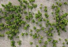 Małe rośliny w piasku zdjęcie royalty free