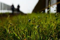 Małe rośliny z białymi kwiatami stroną droga przemian fotografia stock