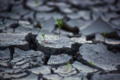 Małe rośliny znajduje ich sposób zdjęcie royalty free