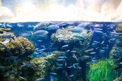 małe ryby Obraz Royalty Free