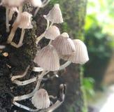 Małe rzeczy na stary drzewny biały czysty marzycielskim Zdjęcie Royalty Free