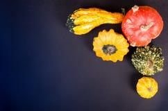 Małe wystrój banie na czarnym tle odizolowywająca piękna jesień rama opuszczać istnego biel Zdjęcia Royalty Free
