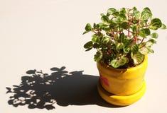 małe zielone rośliny Obrazy Stock
