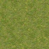 Małe Zielone trawy bezszwowa konsystencja Obrazy Stock