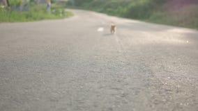 Małego czerwień bezpański brudna figlarka na drogi stronie, samotnej w światowym pojęciu, selekcyjna ostrość zbiory