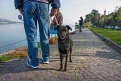 Małego psa ciekawi spojrzenia przy my podczas gdy jego właściciel obserwuje fisher Zdjęcia Stock
